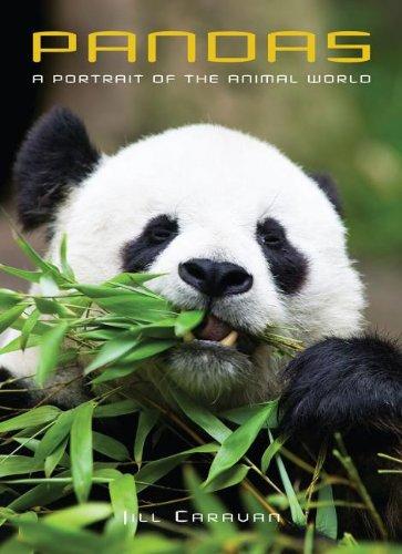 9781597643177: Pandas (Portraits of the Animal World)