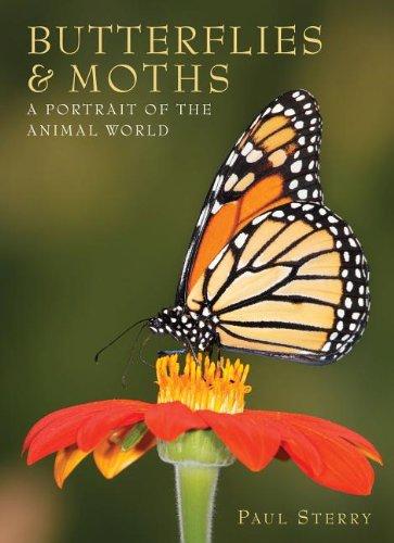 9781597643559: Butterflies & Moths: A Portrait of the Animal World