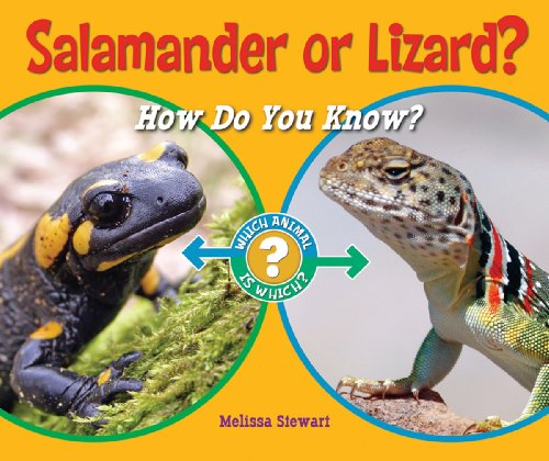 9781598452389: Salamander or Lizard?: How Do You Know? (Which Animal Is Which?)