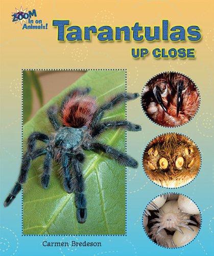 9781598454215: Tarantulas Up Close (Zoom in on Animals!)