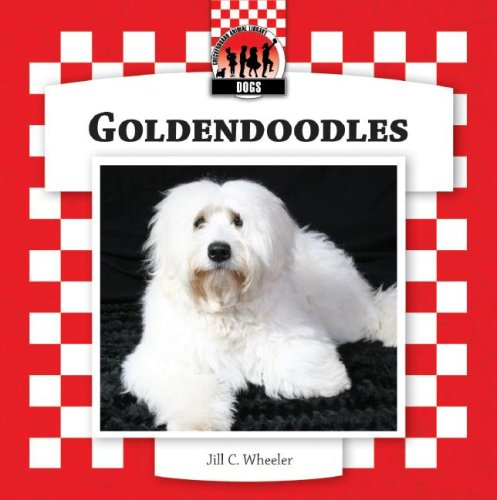 9781599289632: Goldendoodles (Designer Dogs Set 7)