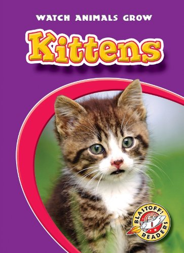 Kittens (Paperback): Colleen Sexton