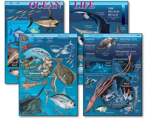 9781600224980: Ocean Life Bulletin Board Set