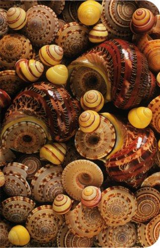 Shells, Notizbuch, klein: Unknown.