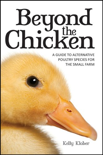 Beyond the Chicken: A Guide to Alternative: Klober Kelly