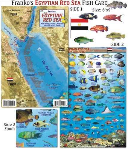 9781601902405: Egyptian Red Sea Dive Map & Reef Creatures Guide Franko Maps Laminated Fish Card