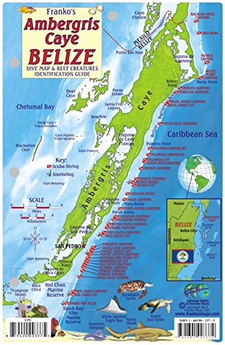 9781601903372: Ambergris Caye Belize Dive Map & Reef Creatures Guide Franko Maps Laminated Fish Card