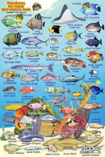 9781601904218: Honduras Bay Islands Reef Creatures Guide Franko Maps Laminated Fish Card 4