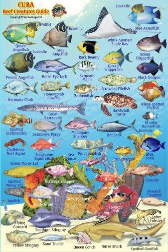 9781601904225: Cuba Reef Creatures Guide Franko Maps Laminated Fish Card 4