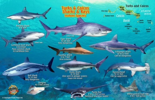 9781601904461: Turks & Caicos Sharks & Rays Guide Franko Maps Laminated Fish Card