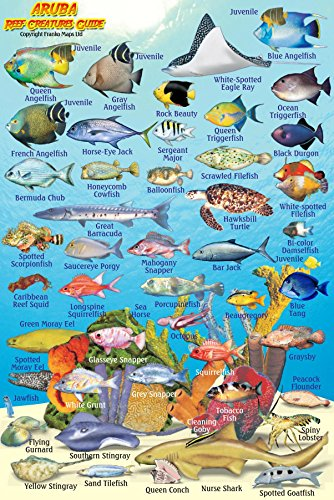 9781601904522: Aruba Reef Creatures Guide Franko Maps Laminated Fish Card 4