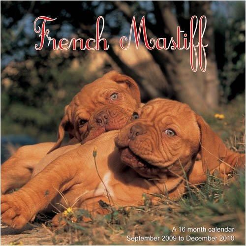 9781602545885: French Mastiff 2010 Wall Calendar
