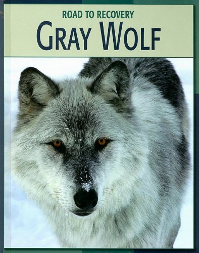 9781602790308: Gray Wolf (Road to Recovery (Library))