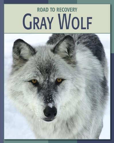 9781602791657: Gray Wolf Gray Wolf (Road to Recovery (eBook))