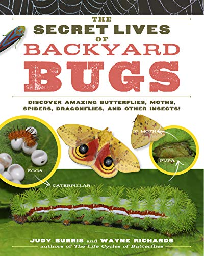 9781603425636: The Secret Lives of Backyard Bugs: Discover Amazing Butterflies, Moths, Spiders, Dragonflies, and Other Insects!