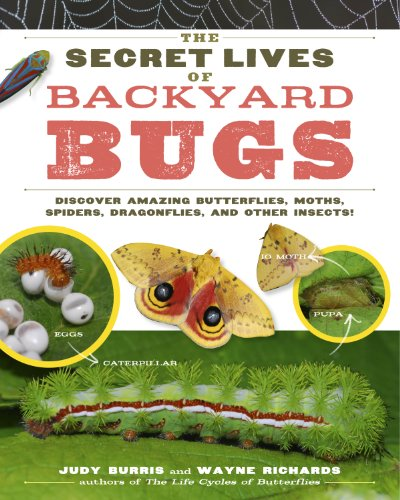 9781603429856: The Secret Lives of Backyard Bugs: Discover Amazing Butterflies, Moths, Spiders, Dragonflies, and Other Insects!