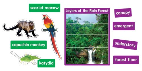 9781604180558: Photographic Rain Forest Animals Bulletin Board Set