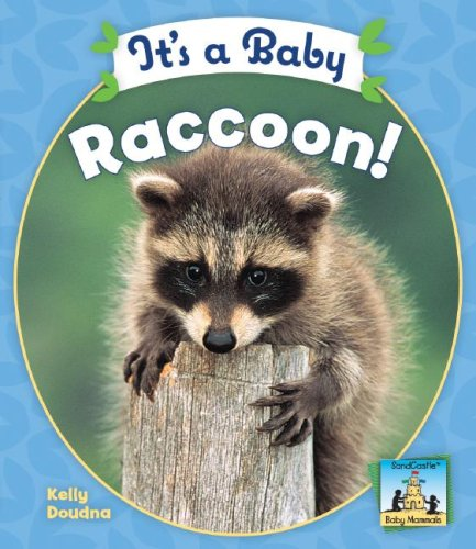 It's a Baby Raccoon! (SandCastle: Baby Mammals): Kelly Doudna
