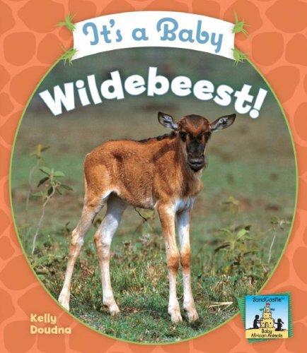 It's a Baby Wildebeest! (Sandcastle: Baby African Animals): Kelly Doudna