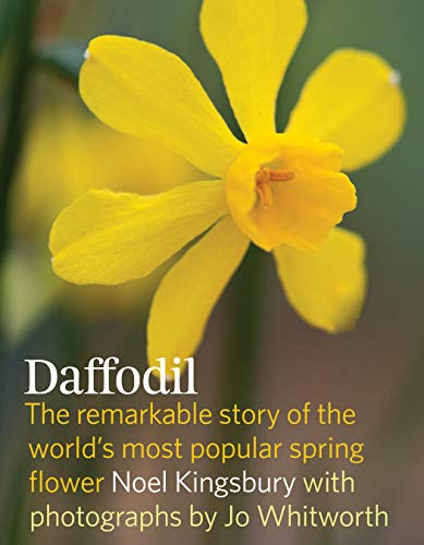 9781604693188: Daffodil: The Remarkable Story of the World's Most Popular Spring Flower
