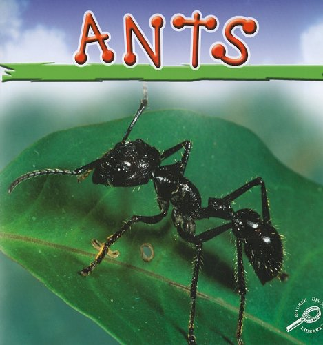 9781604720433: Ants (Insects Discovery Library)