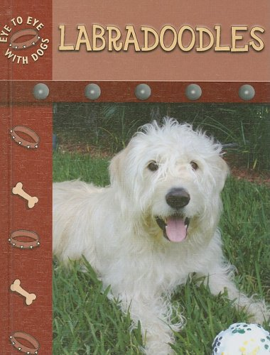 9781604723632: Labradoodles (Eye to Eye With Dogs)