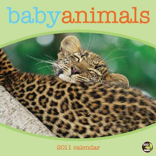 9781604936216: Baby Animals 2011 Wall Calendar