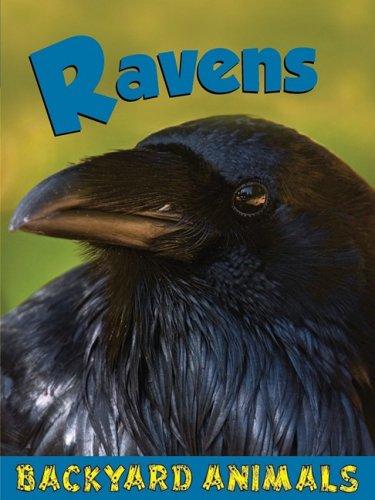 9781605960821: Ravens (Backyard Animals)