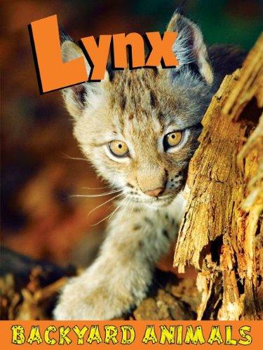 9781605969442: Lynx (Backyard Animals)