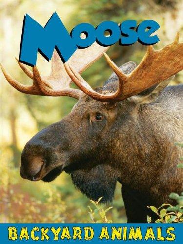 9781605969473: Moose (Backyard Animals)