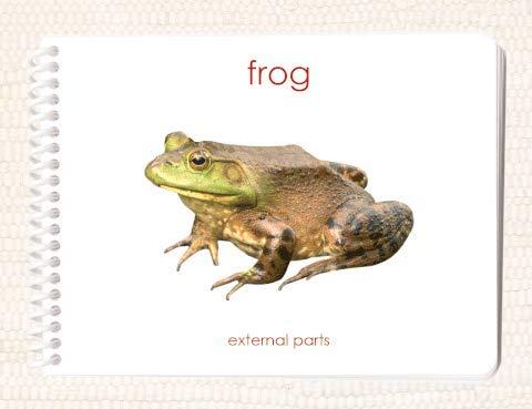 9781606290071: Frog: External Parts Book (External Anatomy of the Amphibian)
