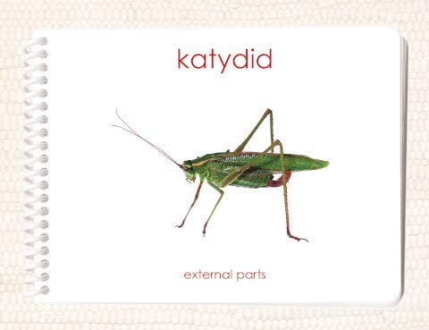 9781606290095: Katydid: External Parts Book (External Anatomy of the Insect)