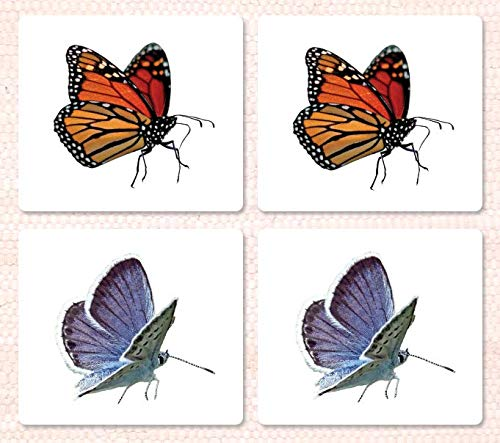 9781606290682: Butterfly Matching Cards