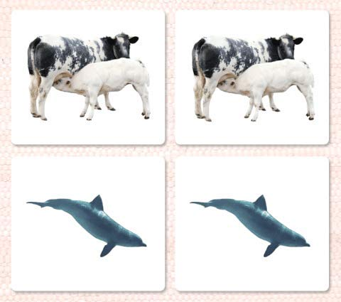 9781606290736: Mammals Matching Cards
