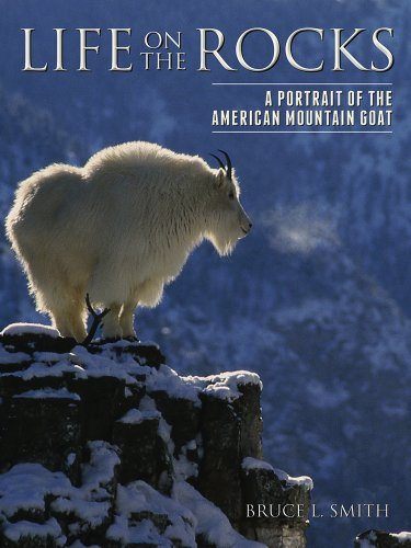 Life on the Rocks - A Portrait of the American Mountain Goat: Smith, Bruce L.