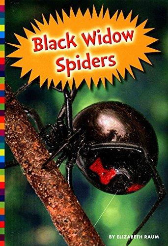 Black Widow Spiders (Hardcover): Elizabeth Raum