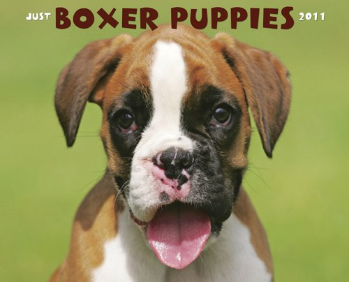 9781607550921: Boxer Puppies 2011 Wall Calendar
