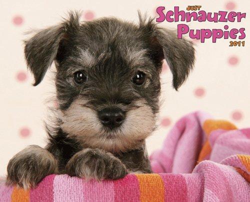 9781607551935: Schnauzer Puppies 2011 Wall Calendar (Just (Willow Creek))
