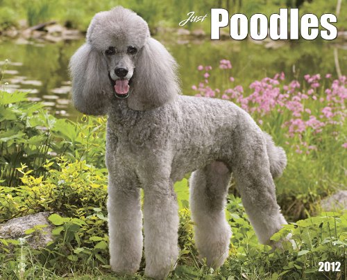 9781607553847: Just Poodles 2012 Calendar (Just (Willow Creek))