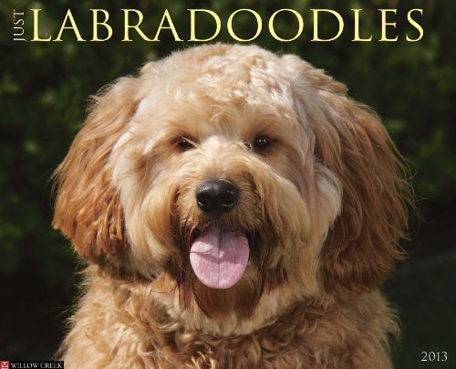 9781607555919: Just Labradoodles (Just (Willow Creek))
