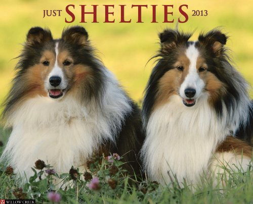 Shelties 2013 Wall Calendar: Willow Creek Press