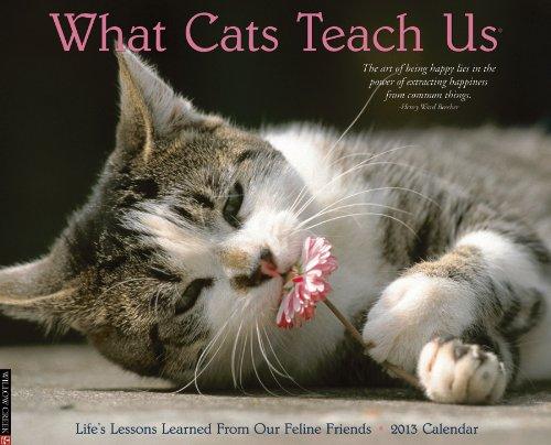 What Cats Teach Us 2013 Wall Calendar: Willow Creek Press