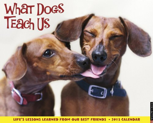 9781607556541: What Dogs Teach Us 2013 Wall Calendar