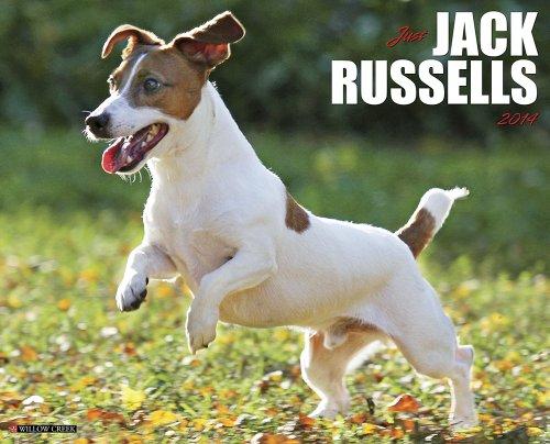 9781607558811: Just Jack Russells 2014 Wall Calendar