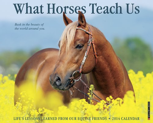 What Horses Teach Us 2014 Wall Calendar: Willow Creek Press