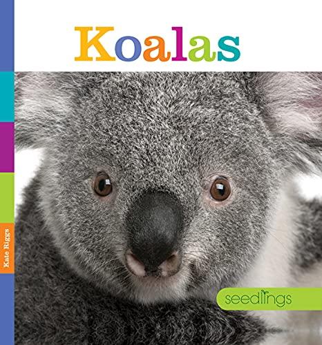 Koalas (Hardcover): Kate Riggs