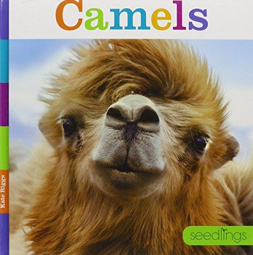Seedlings Camels: Riggs, Kate