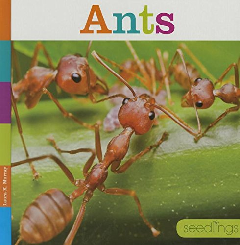 Ants (Hardcover): Laura K. Murray