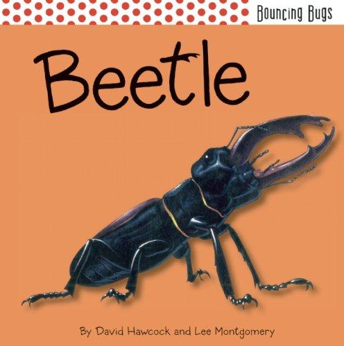 9781608872138: Beetle (Bouncing Bugs)