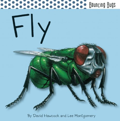 9781608872145: Fly (Bouncing Bugs)